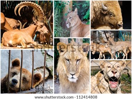 Wild animals - stock photo