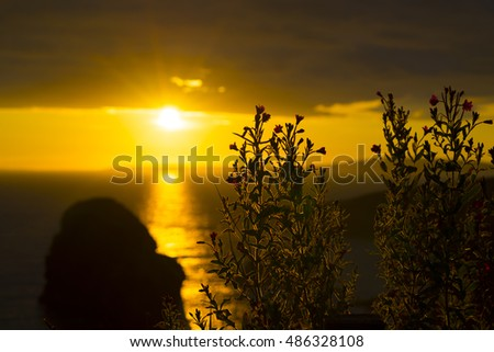 wild atlantic way sunset over the ballybunion county kerry coastline with wild flowers in foreground