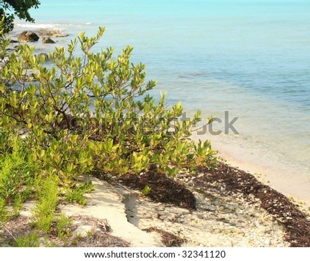 wild beach - stock photo
