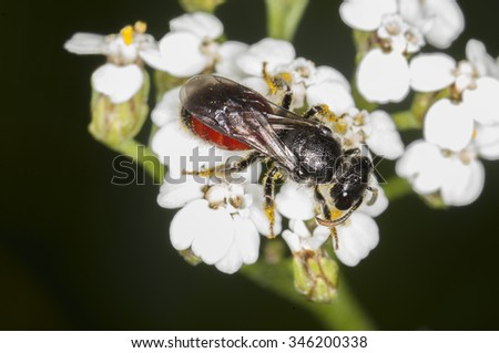 Wild bee - stock photo