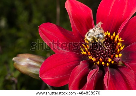 wild bee on flower