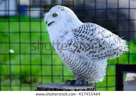 Wild bird one white owl is sitting