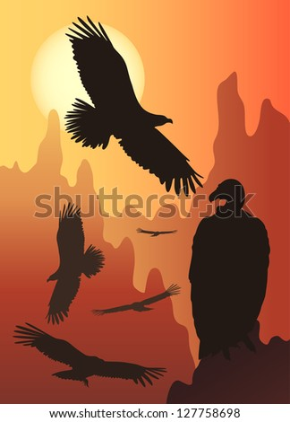 wild birds in the wild nature - stock photo