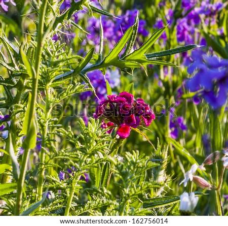 wild blooming flowers in meadow - stock photo