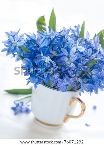 Wild blue spring flower in white cup