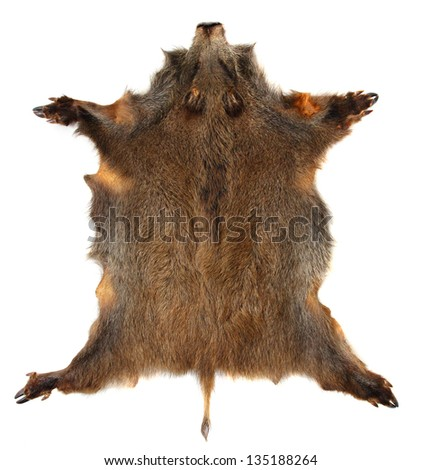 Wild boar (Sus scrofa) skin isolated on a white background. - stock photo