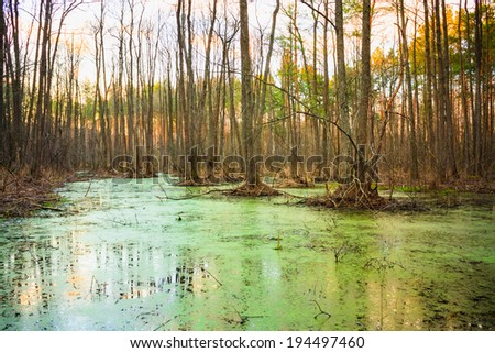 Wild Bog Swamp. Russian Nature In Spring