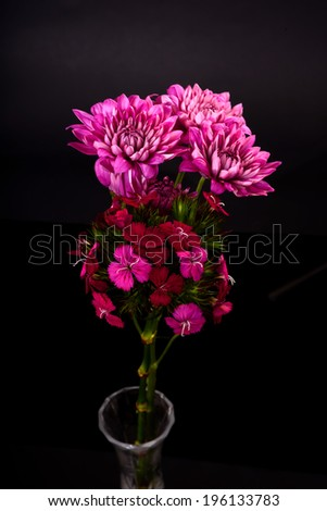 wild carnations and Chrysanthemum isolated over a black background