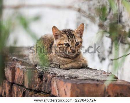 wild cat - stock photo