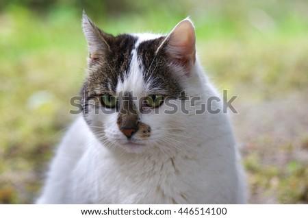 wild cat sitting on grass background - stock photo