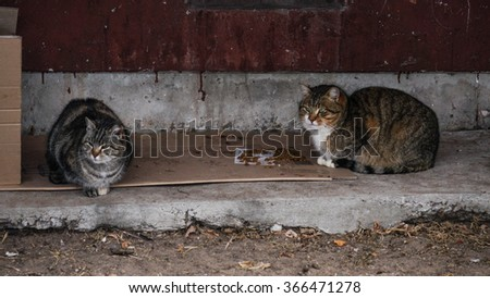 Wild Cats trying to find a shelter from Cold Winter - stock photo