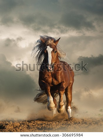 Wild chestnut draft horse running gallop under the cloudy skies