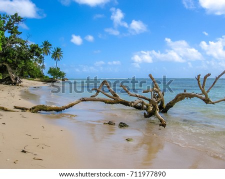 Wild coast of the island of Grande-Terre, Caribbean. Tree trunks in the sea, vegetation and palm trees on the beaches of Guadeloupe coast.