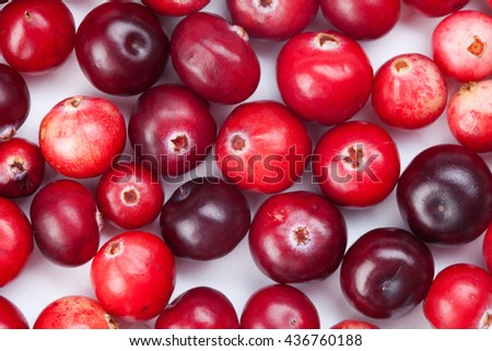 Wild cranberry color variation. Red, ripe cranberries macro view.  copy space. up view, studio photo - stock photo