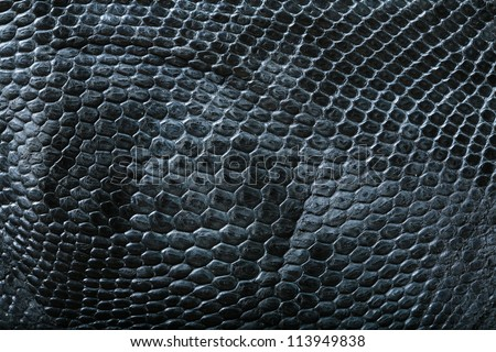wild crocodile skin pattern in many style. - stock photo