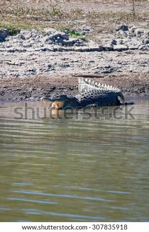 Wild Crocodile Sunbathing - stock photo