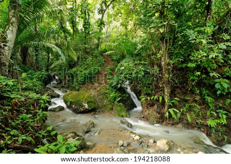Wild Darien jungle near Colombia and Panama border. Central America.  - stock photo