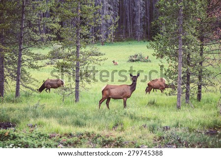 Wild deer female in the forest, USA. Natural photography. - stock photo