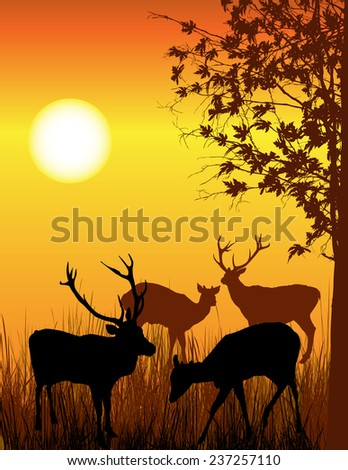 Wild deer illustration - stock photo