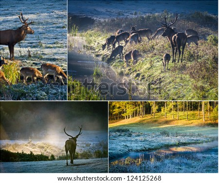 Wild deer in autumn forest - stock photo