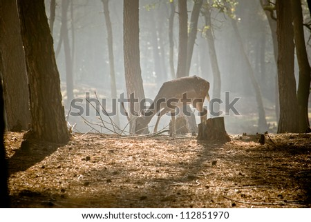 Wild deer in the morning - stock photo