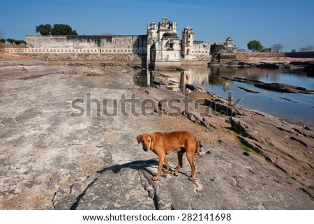Wild dog looking for food near the water around the historical Padmini's palace of the Chittorgarh Fort. It is an UNESCO World Heritage Site under the group Hill Forts of Rajasthan, India. - stock photo