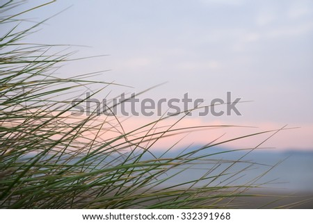 wild dune grass in beal kerry on the wild atlantic way - stock photo