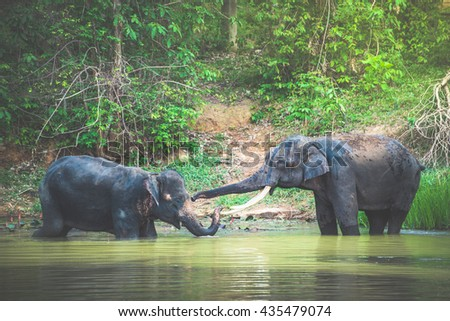 Wild elephant in the beautiful forest - stock photo