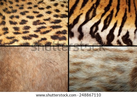 wild felines fur collection, real pelt textures of tiger, lion, ocelot and leopard - stock photo