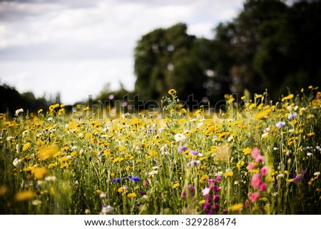 wild field of flowers - stock photo