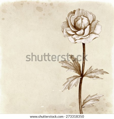 Wild flower illustration. Vintage background - stock photo