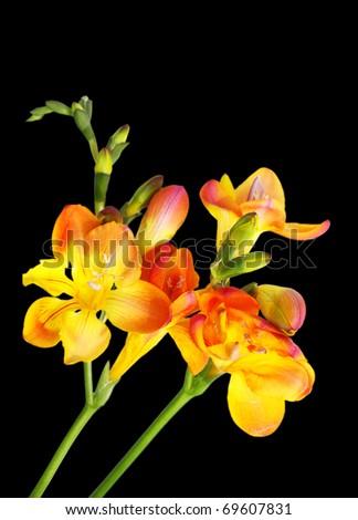 Wild flowers against a dark background - stock photo