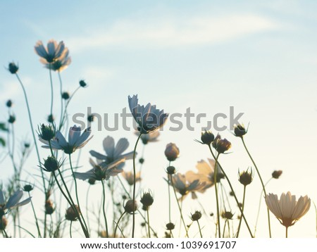 Wild flowers against the background of the sky, bottom view, toned. Flower background, soft focus