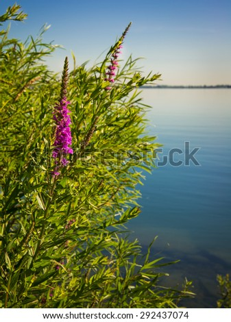 Wild flowers along river under sky over lake - stock photo