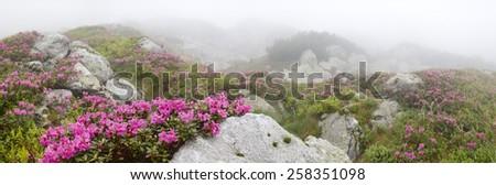wild flowers among rocks in the fog - stock photo