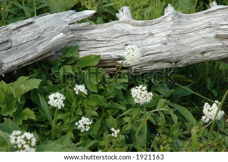 wild flowers and deadwood - stock photo