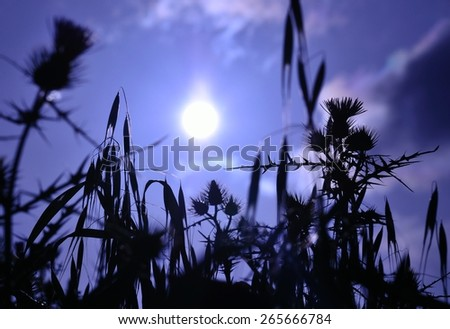 Wild flowers and grasses under the sun of dawn, image with color effect - stock photo