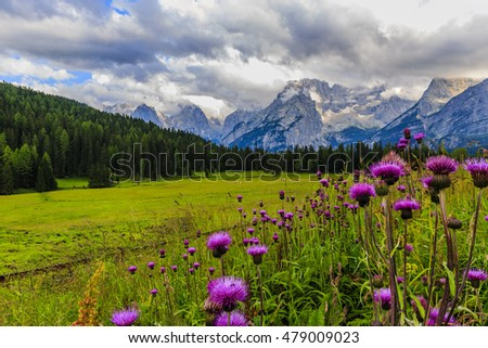Wild flowers and range of Sorapis Mountains and Monte Antelao with grassland in Misurina, near Cortina d'Ampezzo, Dolomite Alps, Italy
