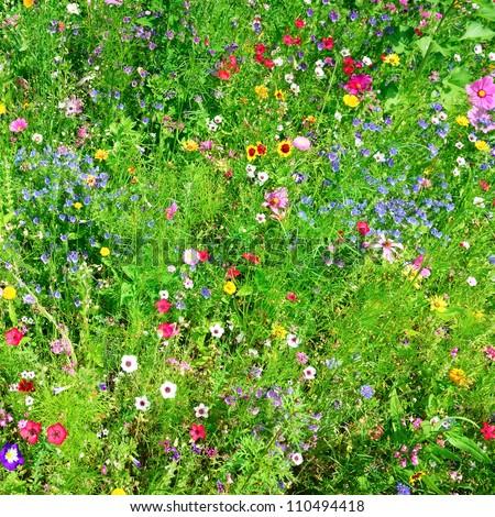 wild flowers background - stock photo