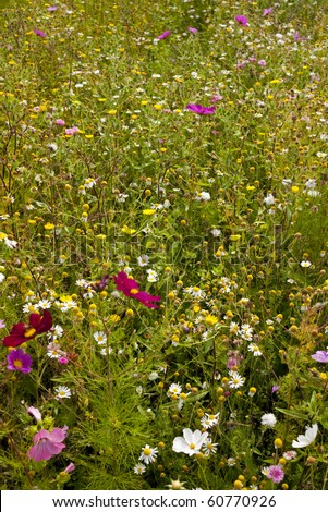 Wild flowers blooming on meadow in spring - stock photo