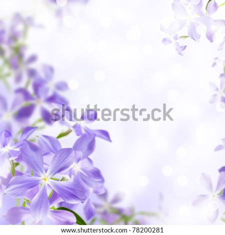 wild flowers blue blooming on violet background - stock photo
