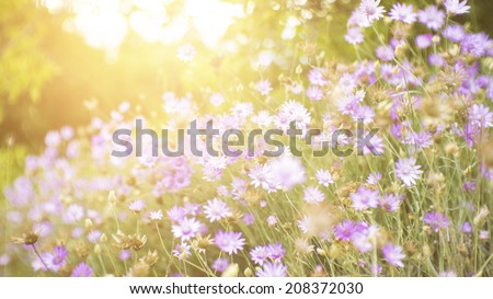 Wild flowers in a forest meadow with glow of the setting sun in the background. - stock photo