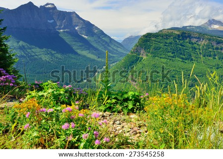 wild flowers in front of the mountains of the Glacier National Park, Montana in summer - stock photo