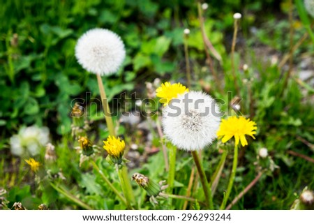 Wild flowers in Spring season. - stock photo