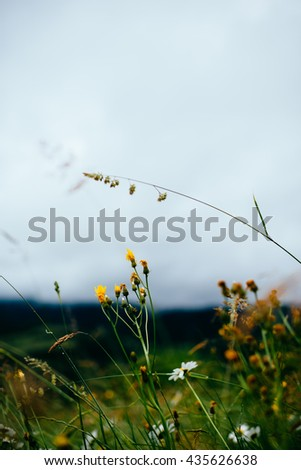 Wild Flowers in the Black Forest - stock photo
