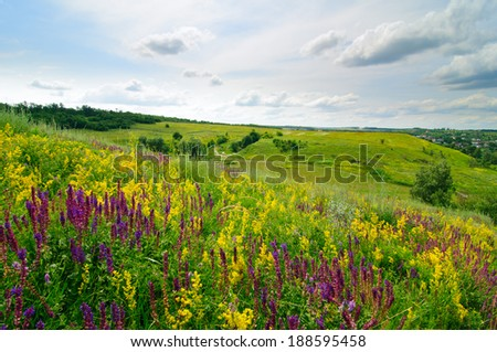 Wild flowers meadow on the green hill in summer - stock photo