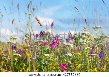 Wild flowers meadow with sky in background - stock photo