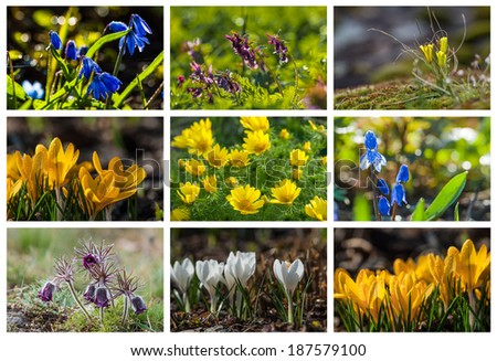 Wild flowers of the field, set for web