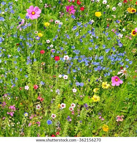 wild flowers on green meadow                                     - stock photo