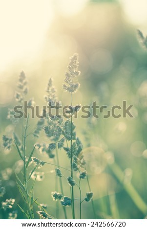 Wild flowers on the meadow at sunset - stock photo